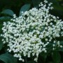 Šťáva z květů černého bezu