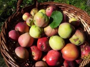 Zavařená strouhaná jablka recept