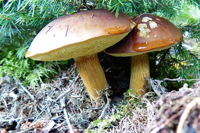 Jak zamrazit houby postup