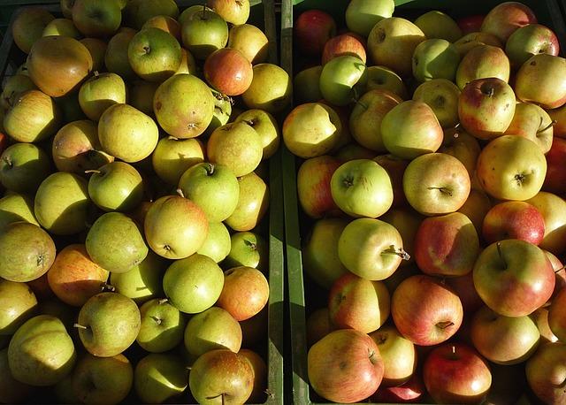 Jablečný mošt recept
