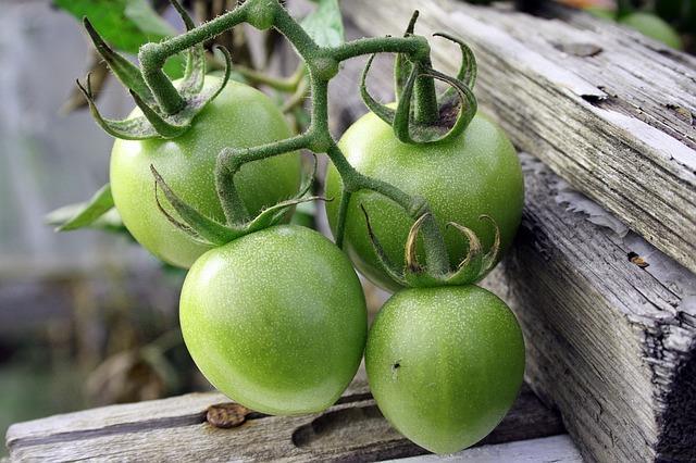 Chutney ze zelených rajčat recept